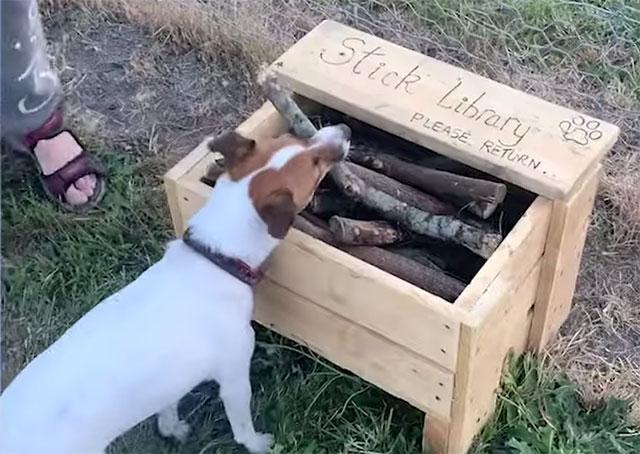 dog park stick library