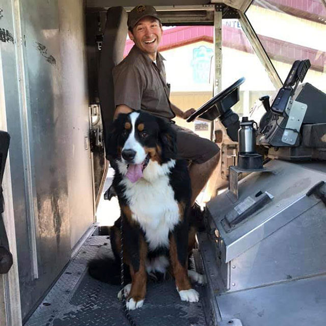 ups dogs facebook