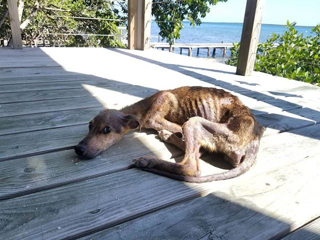 Man Discovers Starving Dog On Remote Island And Saves His Life