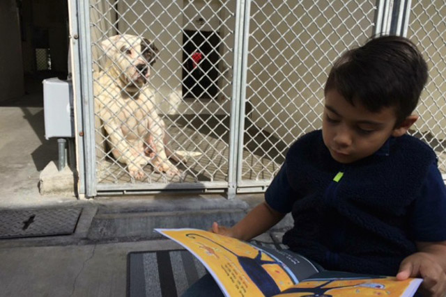 autistic boy reads to shelter dogs