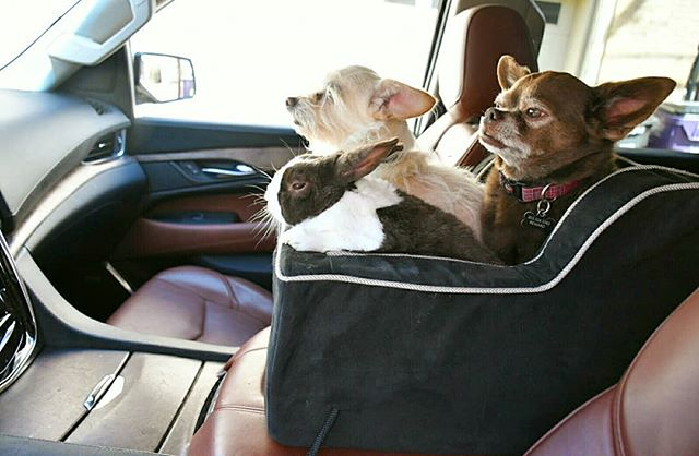 Steve Greig adopts unadoptable pets