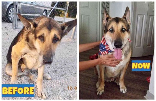 before and after dog rescue