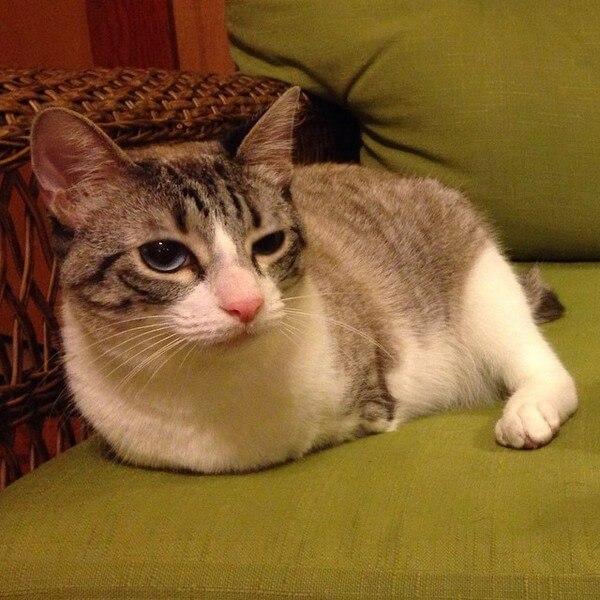 roux the bunny cat 7