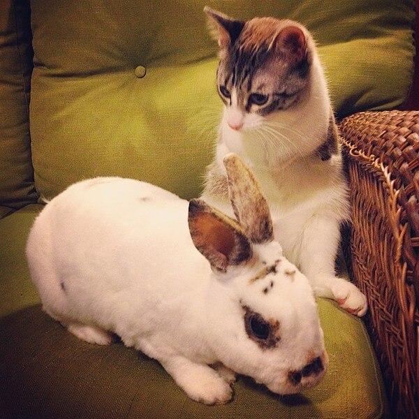 roux the bunny cat 4
