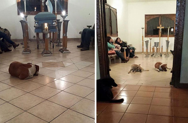 stray-dogs-pay-respects-funeral-animal-lover-margarita-suarez-yucatan-mexico-6