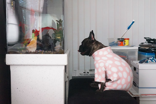 dog spend entire weekend looking at fish tank