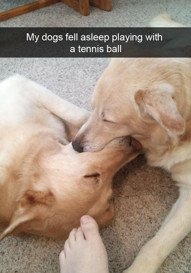 funny dog snapchats