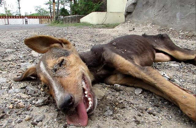 dog puppy rescue