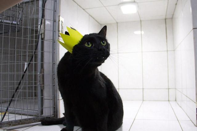 paralyzed cat