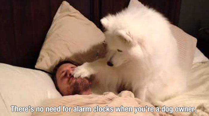 dog owners will understand